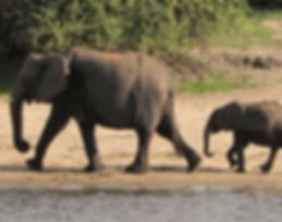 travel Africa, Chobe river cruise, African river cruise, African safari trip, African vacation