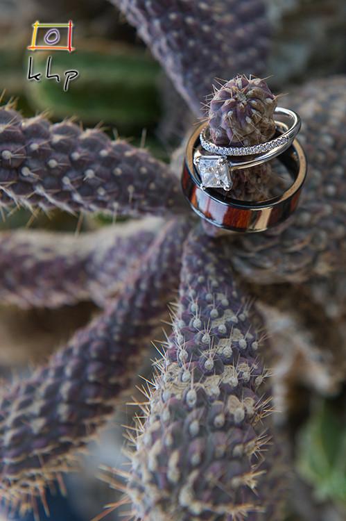Wedding rings on a cactus before a desert wedding in Pioneertown CA