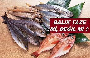BALIK TAZELİĞİ NASIL ANLAŞILIR.jpg