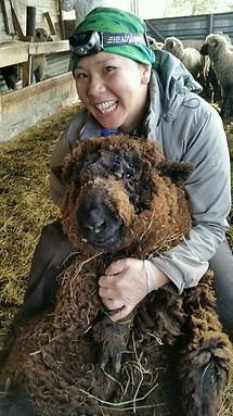 Farm Intern Sheep Lamb Animal Husbandry