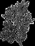 juniper_edited_edited.png