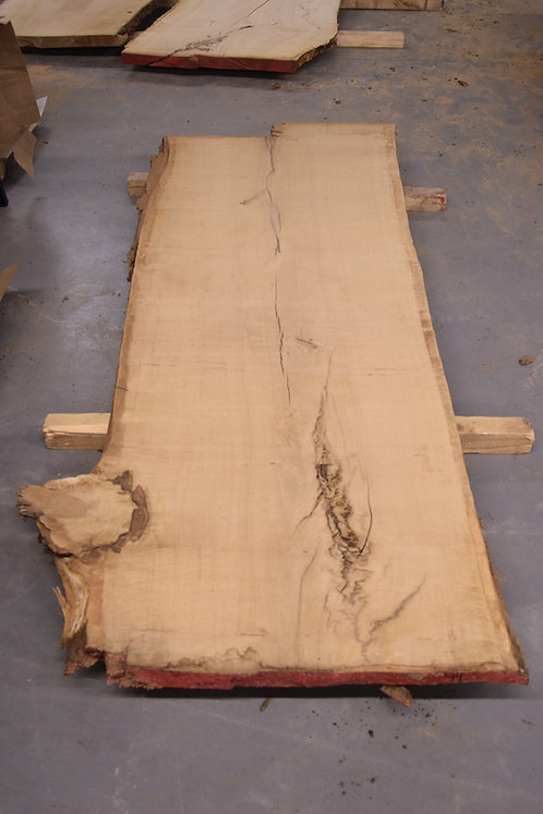 "White Oak Slab 8' 1"" #44"