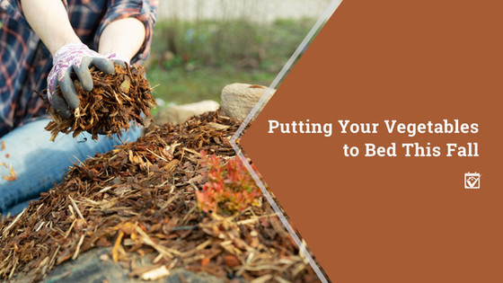 Putting Your Vegetables to Bed This Fall
