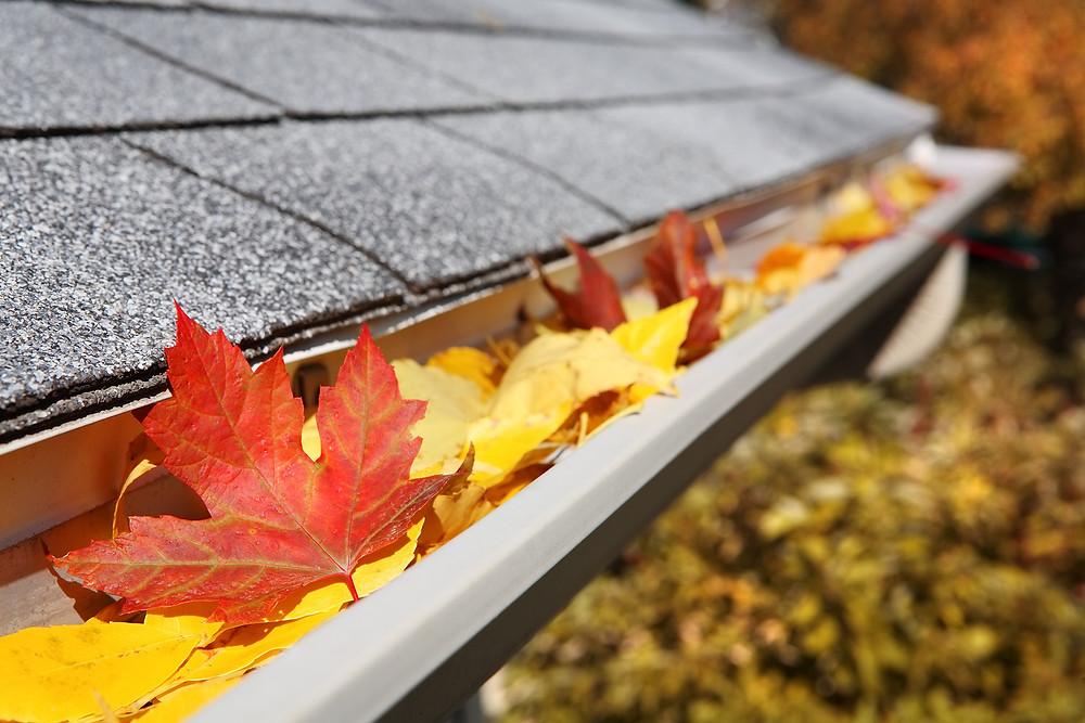 Fall leaves in a rain gutter by Matthew Stewart Real Estate | Roseville | Rocklin | Granite Bay | Lincoln | Loomis
