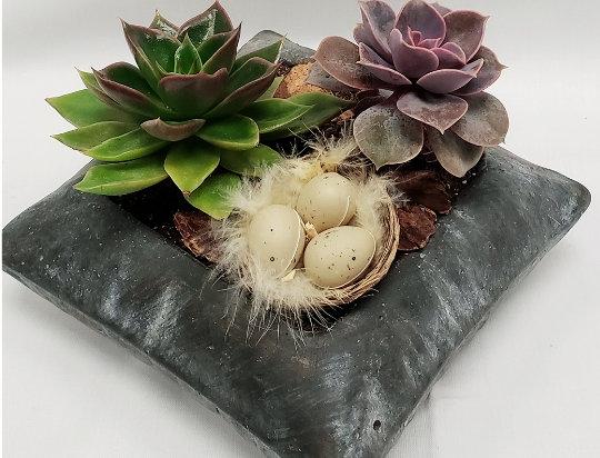 Succulents Rock