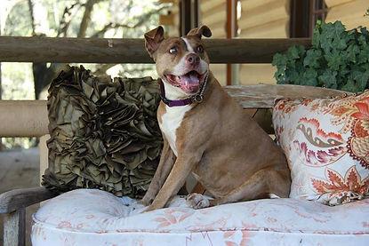 Megan adoptable dog