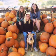 Frieda goes pumpkin picking!