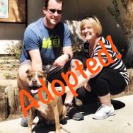Megan - adopted!