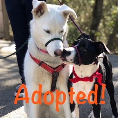 Truman - adopted