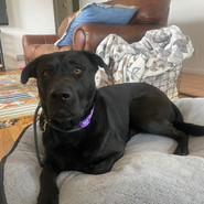 Talley - Adopted