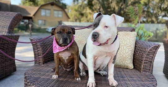 Rosie & Baby