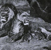 23. Lions at Home by Rosa Bonheur