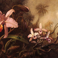 Orchids and a Beetle