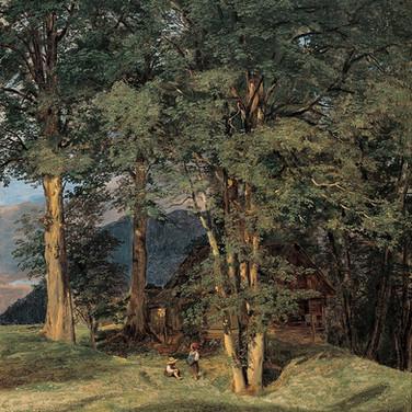 Maple Trees Near Ischl