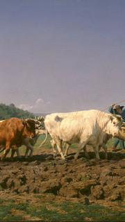 24. Oxen Plowing by Rosa Bonheur