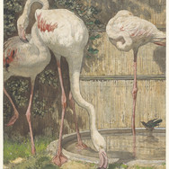 Flamingos Drinking from the Basin