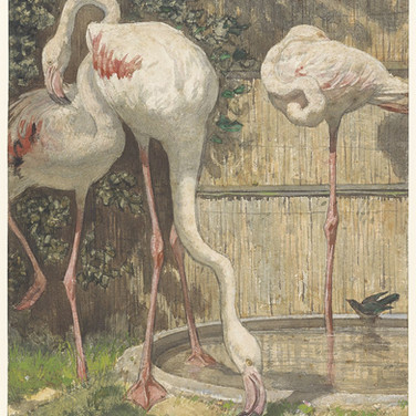 Flamingos Drinking from the Basin
