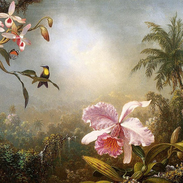 Orchids, Nesting Hummingbirds and a Butterfly