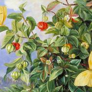 Foliage, Flowers and Fruit