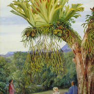 Stagshorn Fern and the Young Rajah of Sarawak