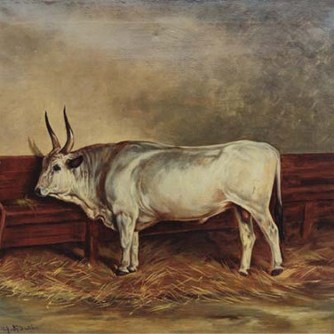 Standing Bull in a Stall