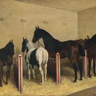 Kone v Stajni