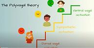 Polyvagal theory.PNG