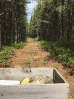 Trail Into Property