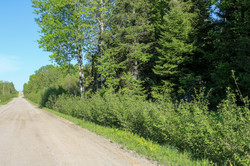 Approx. 700ft of Road frontage
