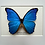 Thumbnail: Giant Blue Morpho Butterfly Frame