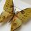 Thumbnail: Madagascan Moon Moth Frame