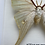Thumbnail: Indian Moon Moth Frame