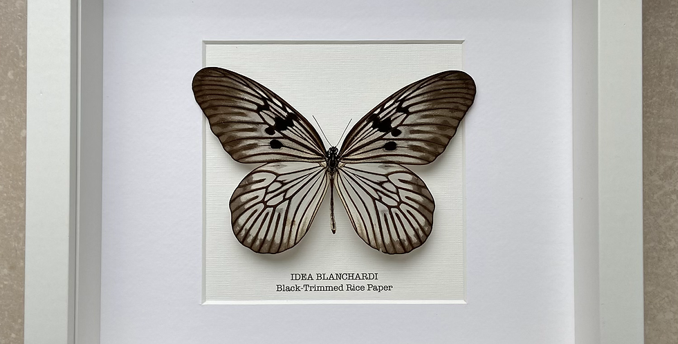Black-Trimmed Rice Paper Butterfly Frame