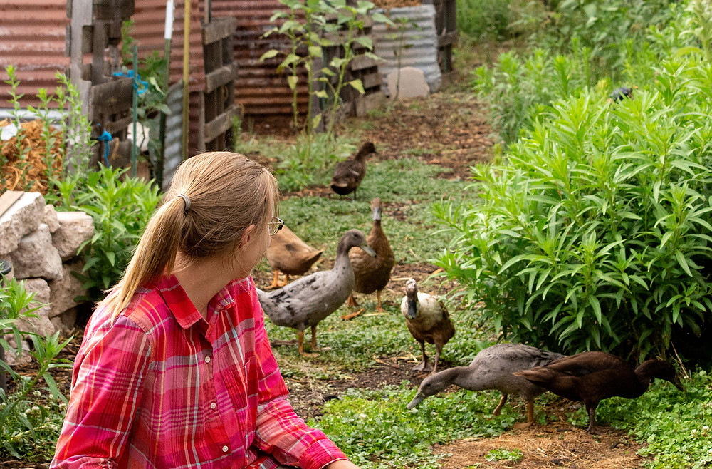 Intern Mackenzie watches over the fowl ladies of Deep Dirt