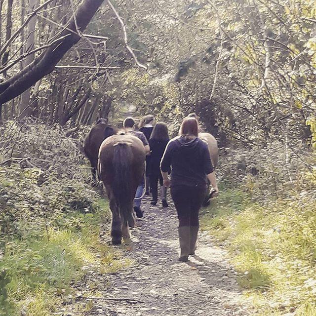 Lovely autumn walk with Irvine Royal Aca