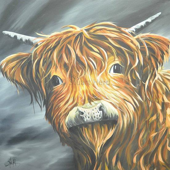 Highland Calf - Lynsey