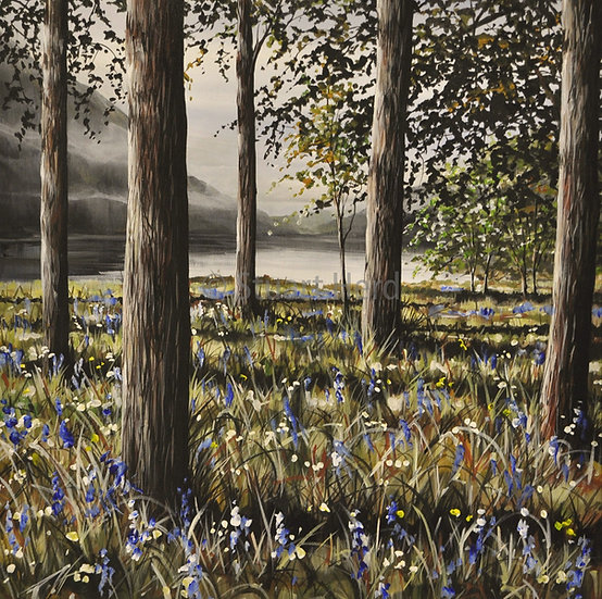 ' Bluebells & Mist ' - Loch Eck