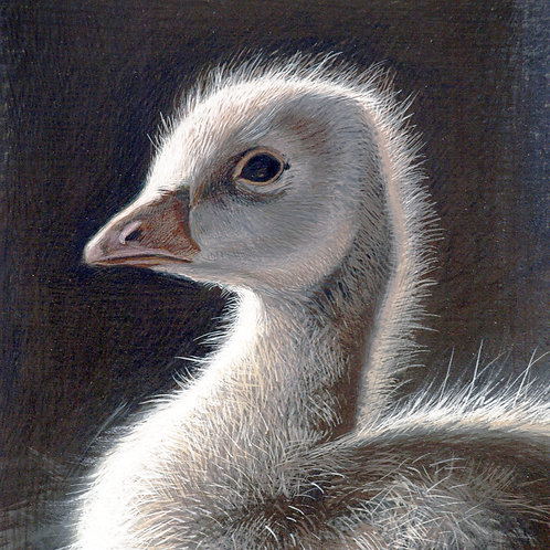 YOUNG GOOSE DETAIL
