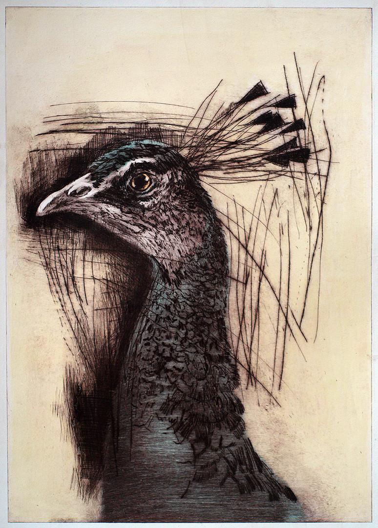 Peacock I by Tom Wood.jpg