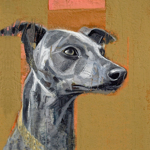 GREY WHIPPET STUDY