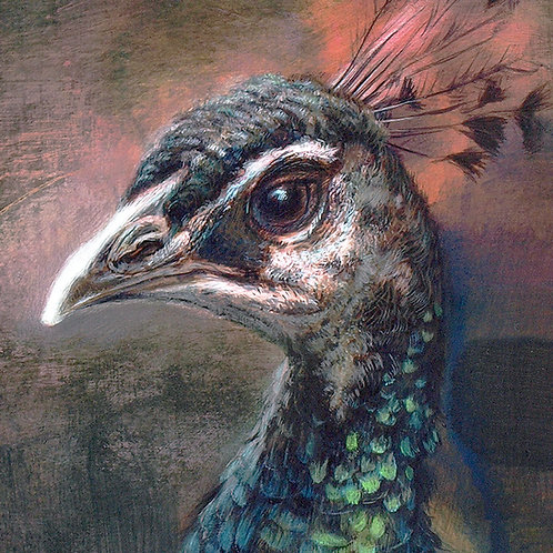 PEACOCK NOCTURNE DETAIL