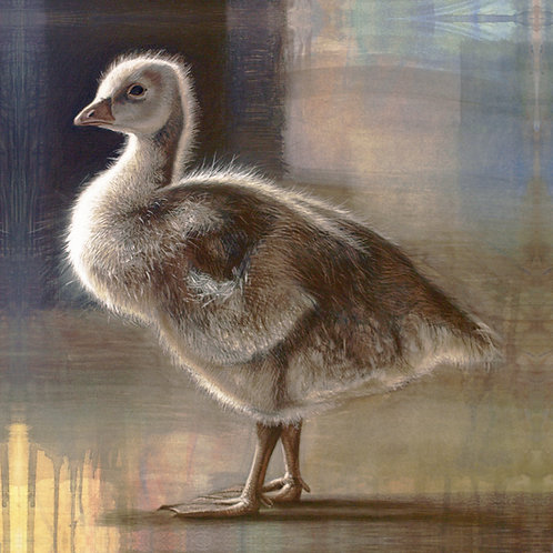 YOUNG GOOSE STUDY