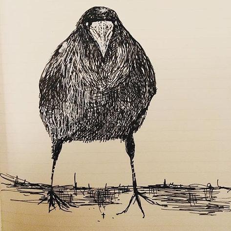 Mr Crow stalking no man's land..jpg