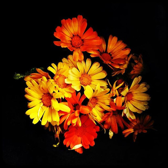 Calendula from my garden,am going to dry
