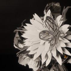 Photo Flowers (2017)