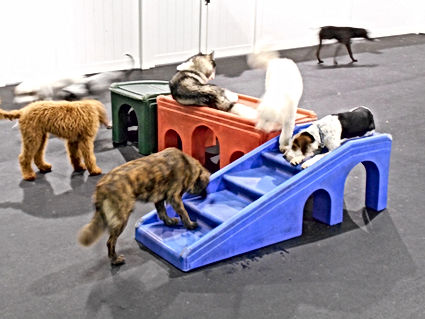 Pack Play at Whole Dogz