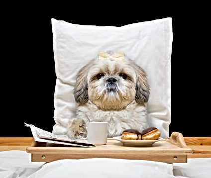 Bed & Breakfast at Whole Dogz