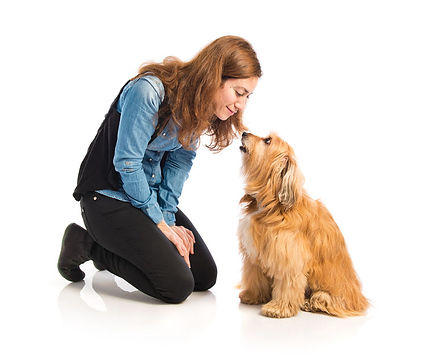 Dog Play at Whole Dogz