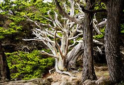 Point Lobos Beacon