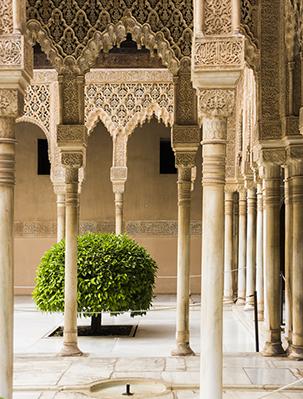 Alhambra Tree